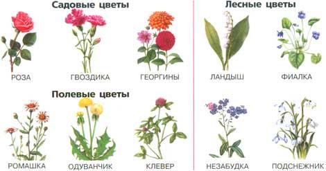Цветы полевые и садовые